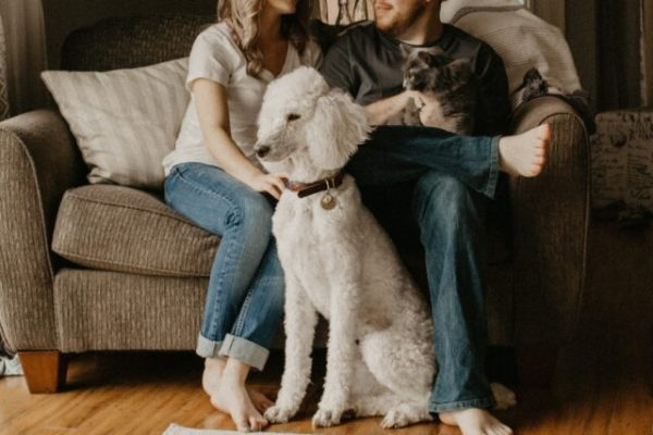 Things to know about Ultrasound in Pets and Animals