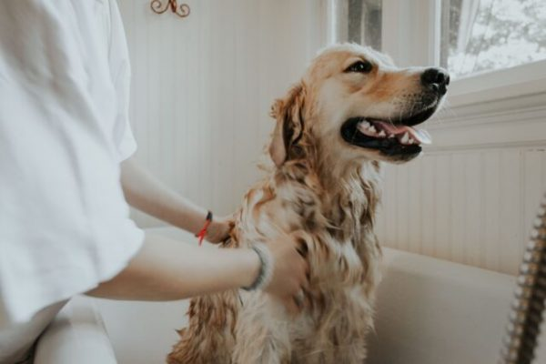 Dog Training Tips: 5 Essential Commands You Should Teach Your Dogs