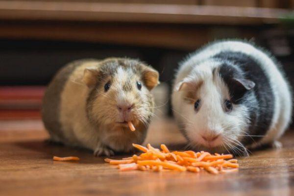 4 Reasons Animals Have Different Diet