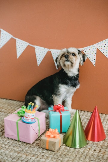 7 Amazing Gift Ideas for Animal Lovers