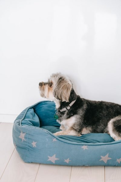 Chew Proof Dog Beds: Why Should You Buy Them?